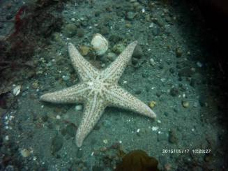 Starfish on Sea Floor