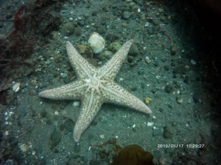 Starfish on Sea Floor
