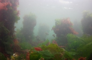 The Sea 6